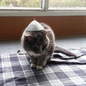 papal-cat